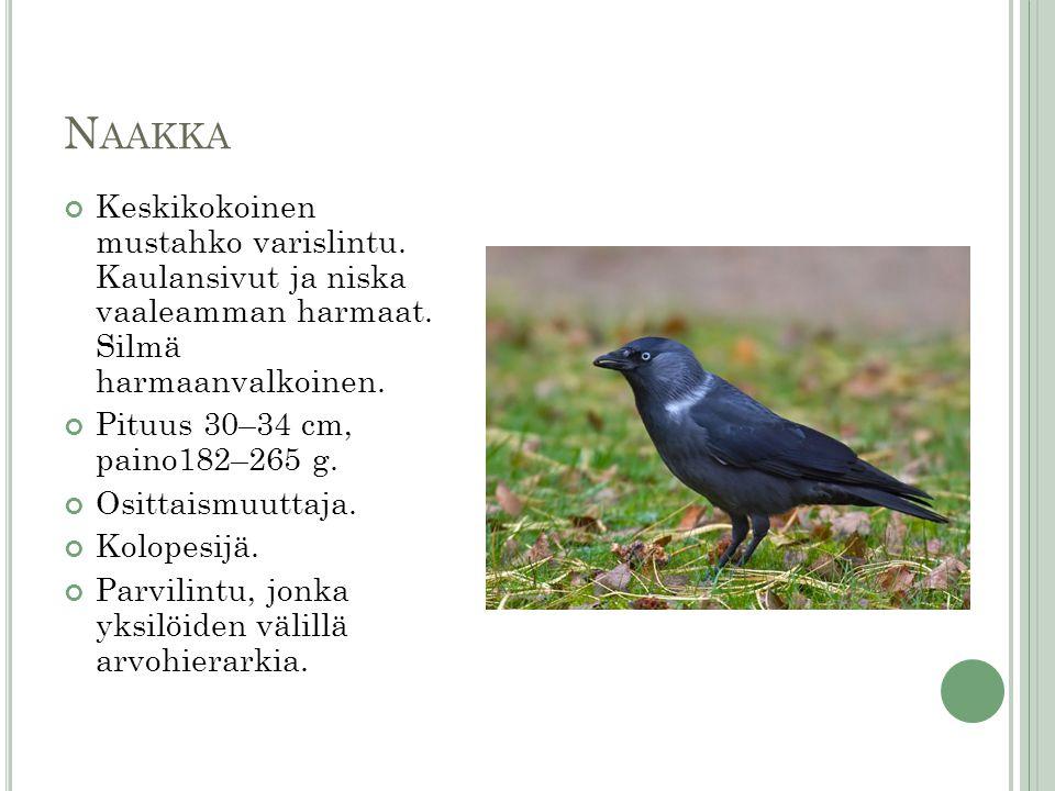 Naakka Keskikokoinen mustahko varislintu. Kaulansivut ja niska vaaleamman harmaat. Silmä harmaanvalkoinen.