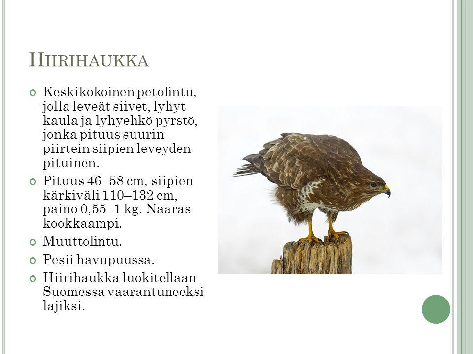 Hiirihaukka