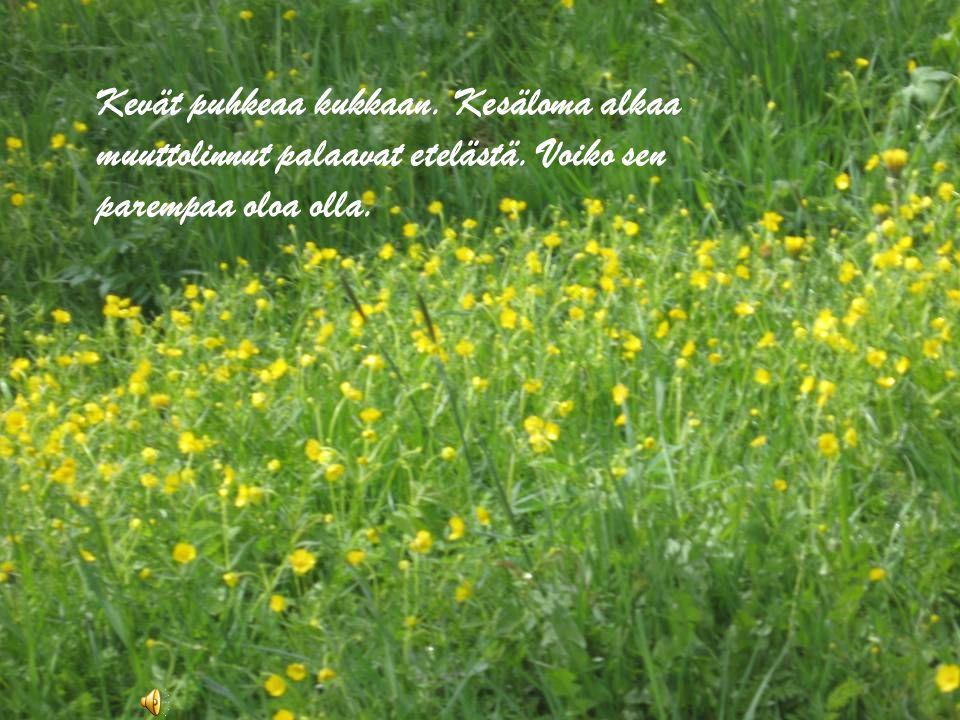 Kevät puhkeaa kukkaan. Kesäloma alkaa muuttolinnut palaavat etelästä