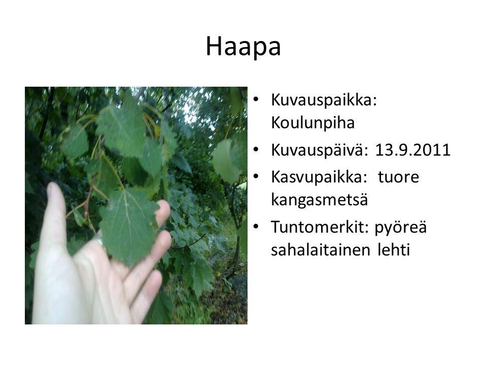 Haapa Kuvauspaikka: Koulunpiha Kuvauspäivä: 13.9.2011