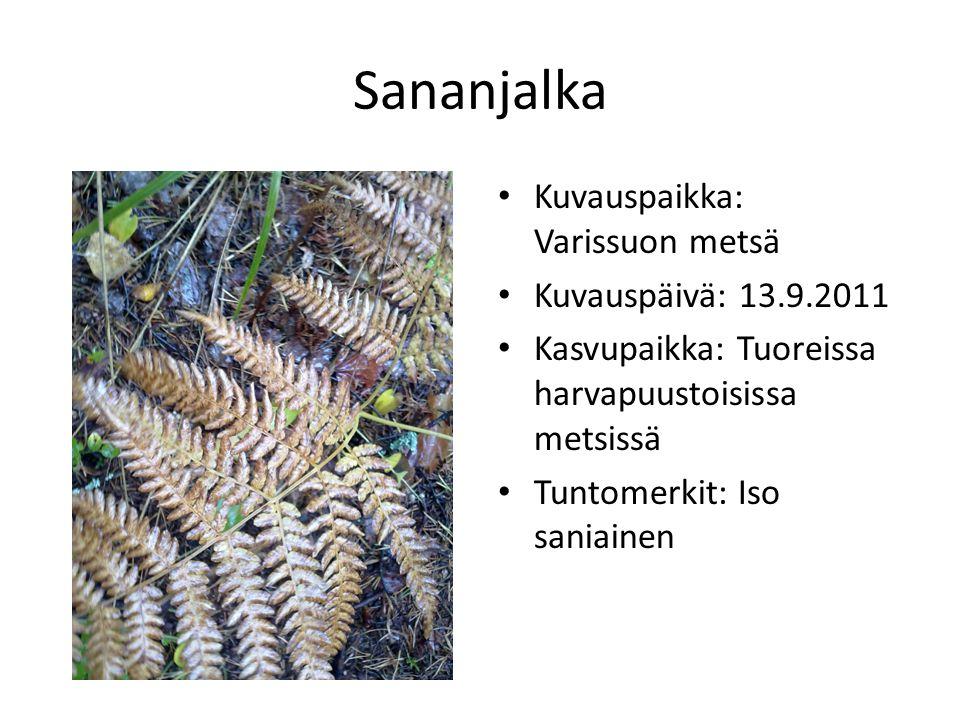 Sananjalka Kuvauspaikka: Varissuon metsä Kuvauspäivä: 13.9.2011