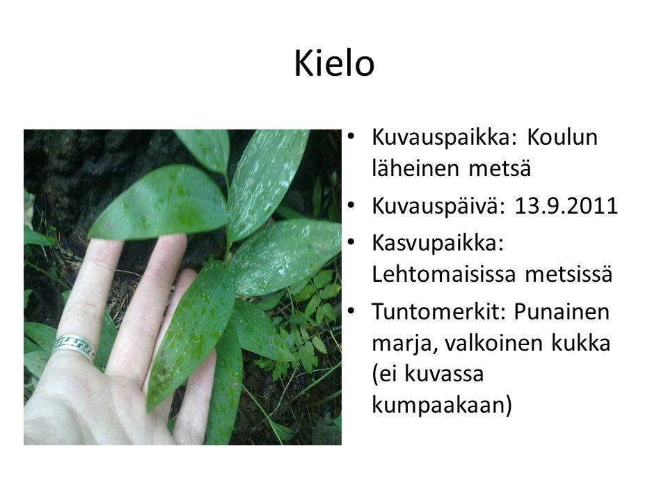 Kielo Kuvauspaikka: Koulun läheinen metsä Kuvauspäivä: 13.9.2011