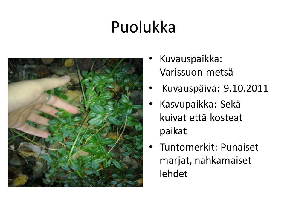Puolukka Kuvauspaikka: Varissuon metsä Kuvauspäivä: 9.10.2011