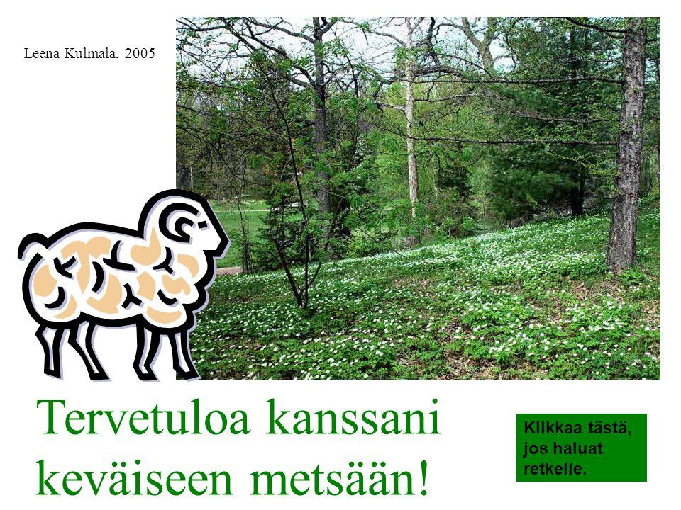 Tervetuloa kanssani keväiseen metsään!