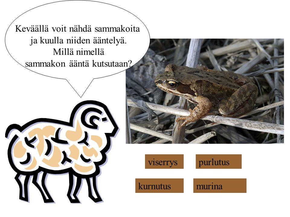 Keväällä voit nähdä sammakoita ja kuulla niiden ääntelyä.
