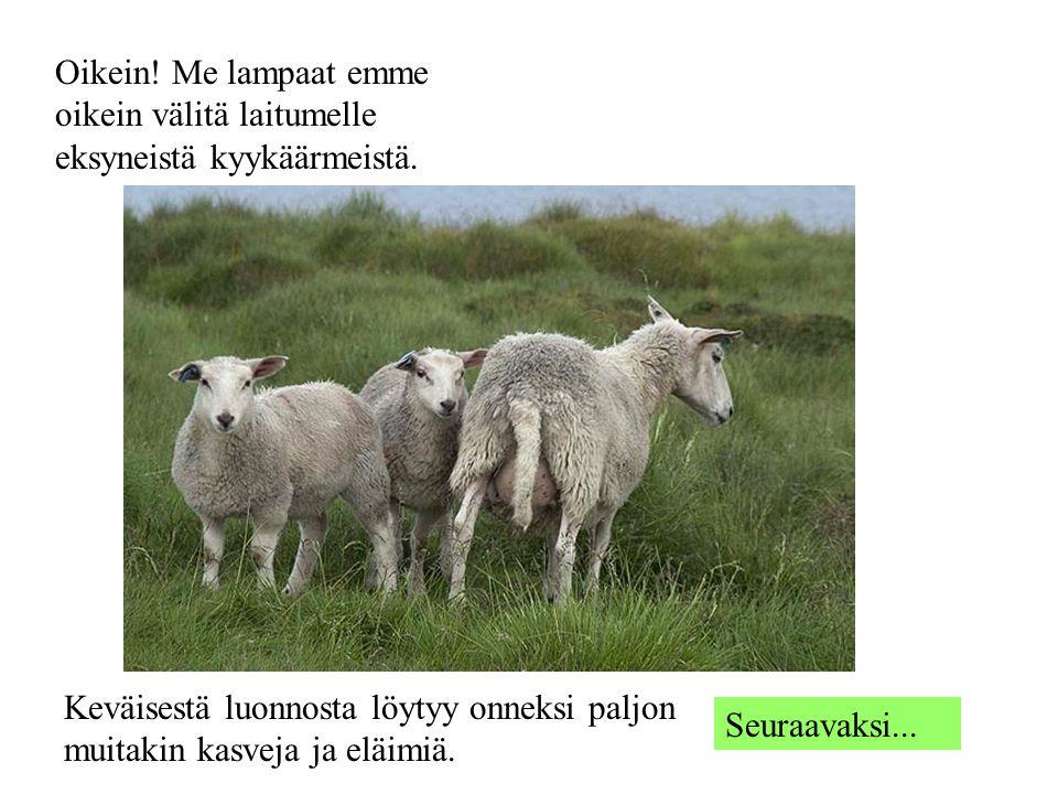 Oikein! Me lampaat emme oikein välitä laitumelle eksyneistä kyykäärmeistä.