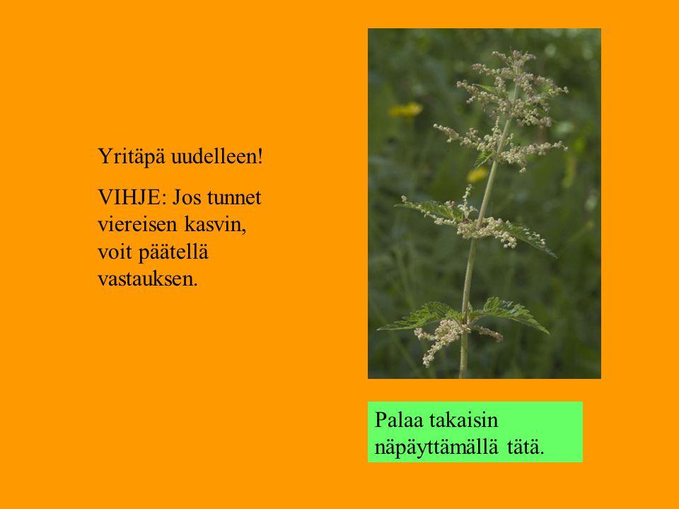 Yritäpä uudelleen. VIHJE: Jos tunnet viereisen kasvin, voit päätellä vastauksen.
