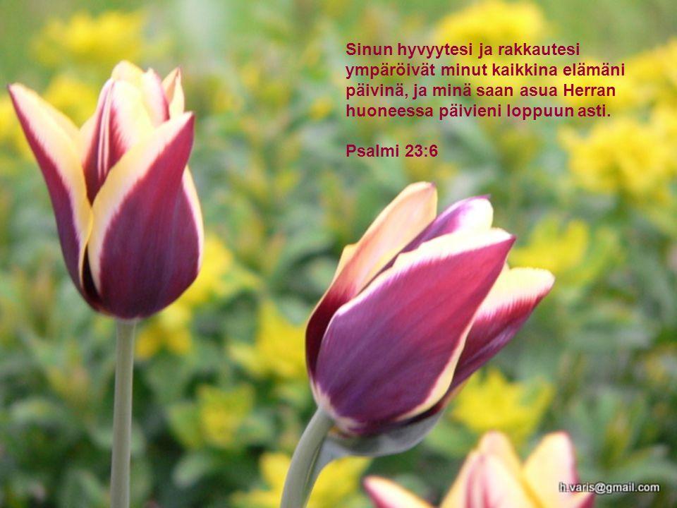 Sinun hyvyytesi ja rakkautesi ympäröivät minut kaikkina elämäni päivinä, ja minä saan asua Herran huoneessa päivieni loppuun asti.