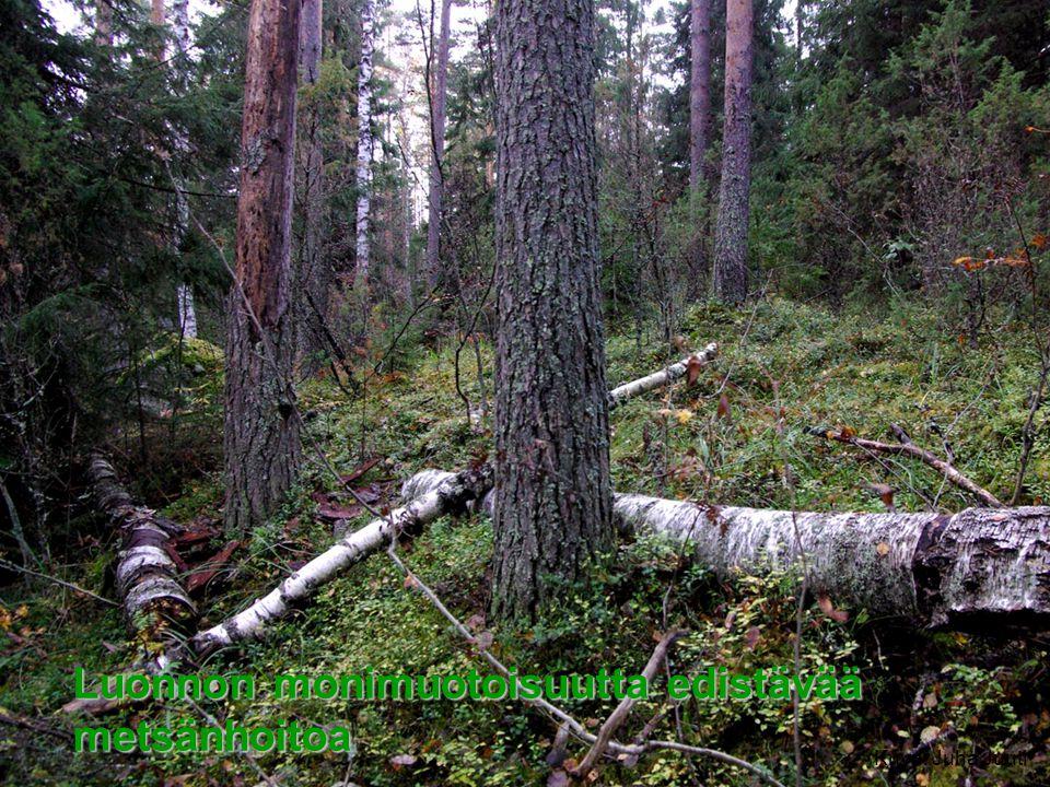 Luonnon monimuotoisuutta edistävää metsänhoitoa