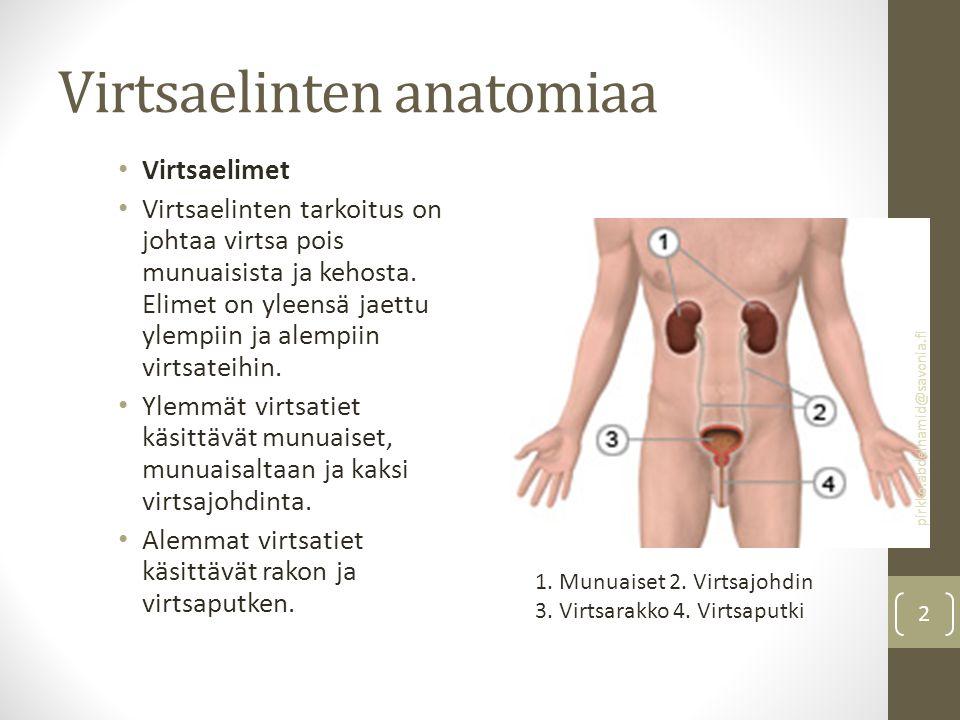 Virtsaelinten anatomiaa