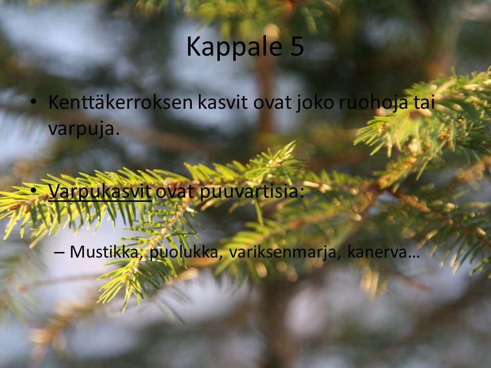 Kappale 5 Kenttäkerroksen kasvit ovat joko ruohoja tai varpuja.