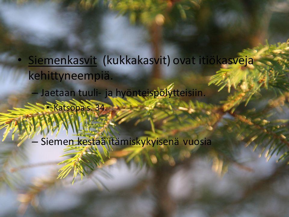 Siemenkasvit (kukkakasvit) ovat itiökasveja kehittyneempiä.
