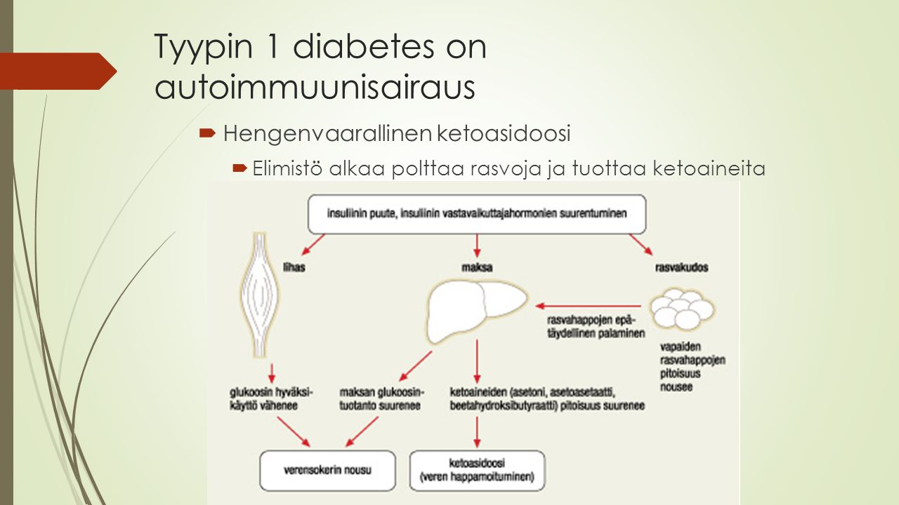 Tyypin 1 diabetes on autoimmuunisairaus