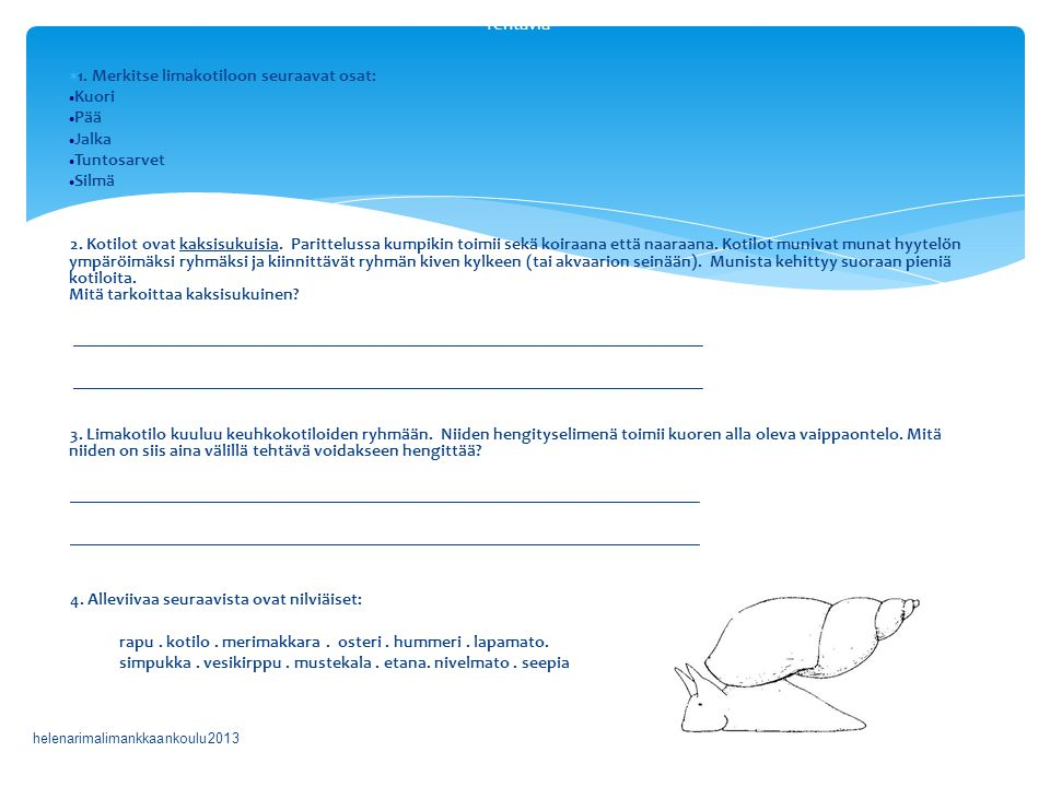 Tehtäviä 1. Merkitse limakotiloon seuraavat osat: Kuori Pää Jalka