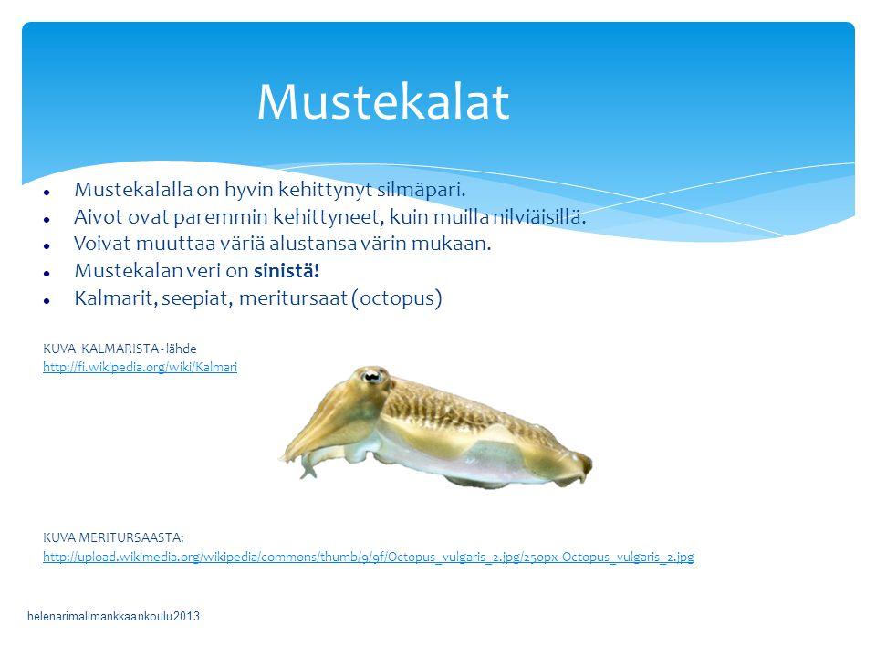 Mustekalat Mustekalalla on hyvin kehittynyt silmäpari.