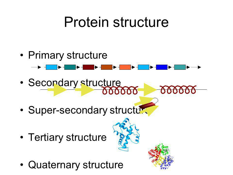 Protein structure Primary structure Secondary structure