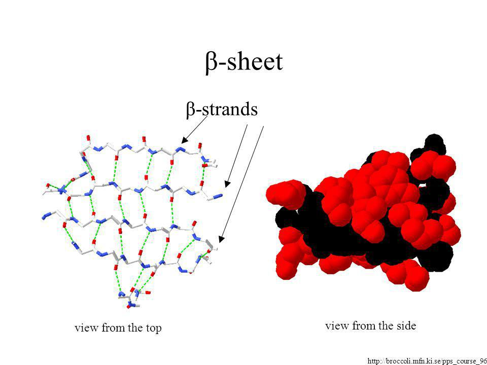 β-sheet β-strands view from the side view from the top