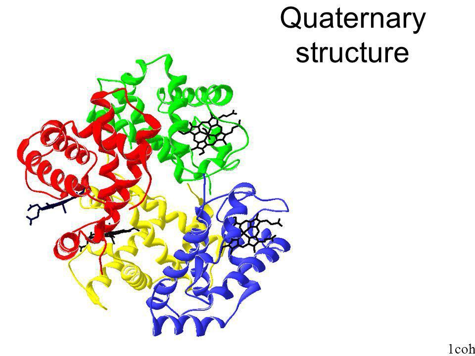 Quaternary structure 1coh