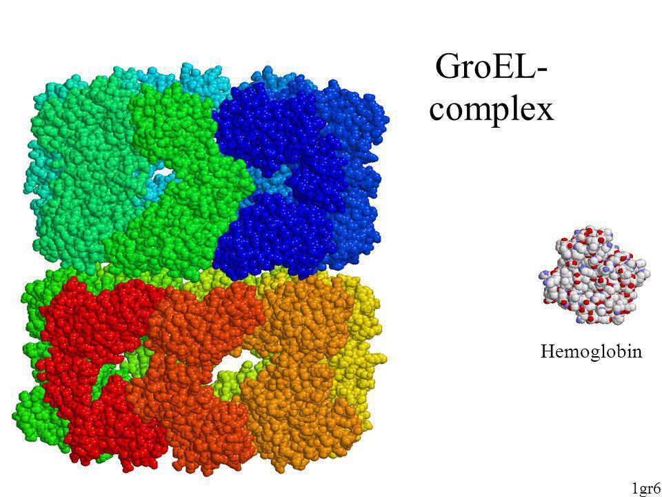 GroEL-complex Hemoglobin 1gr6