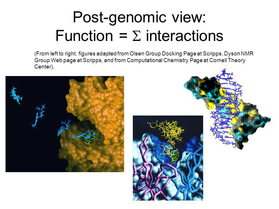 Post-genomic view: Function = S interactions