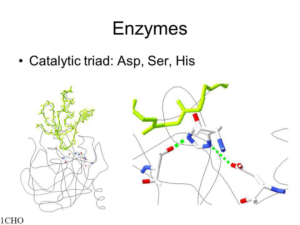 Enzymes Catalytic triad: Asp, Ser, His 1CHO