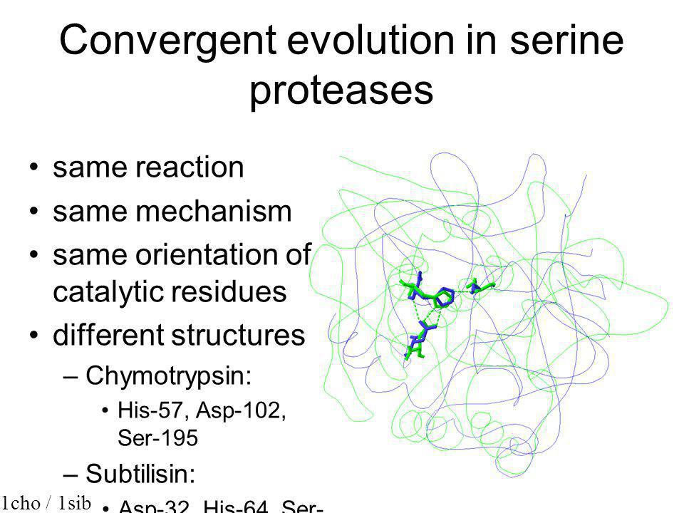 Convergent evolution in serine proteases
