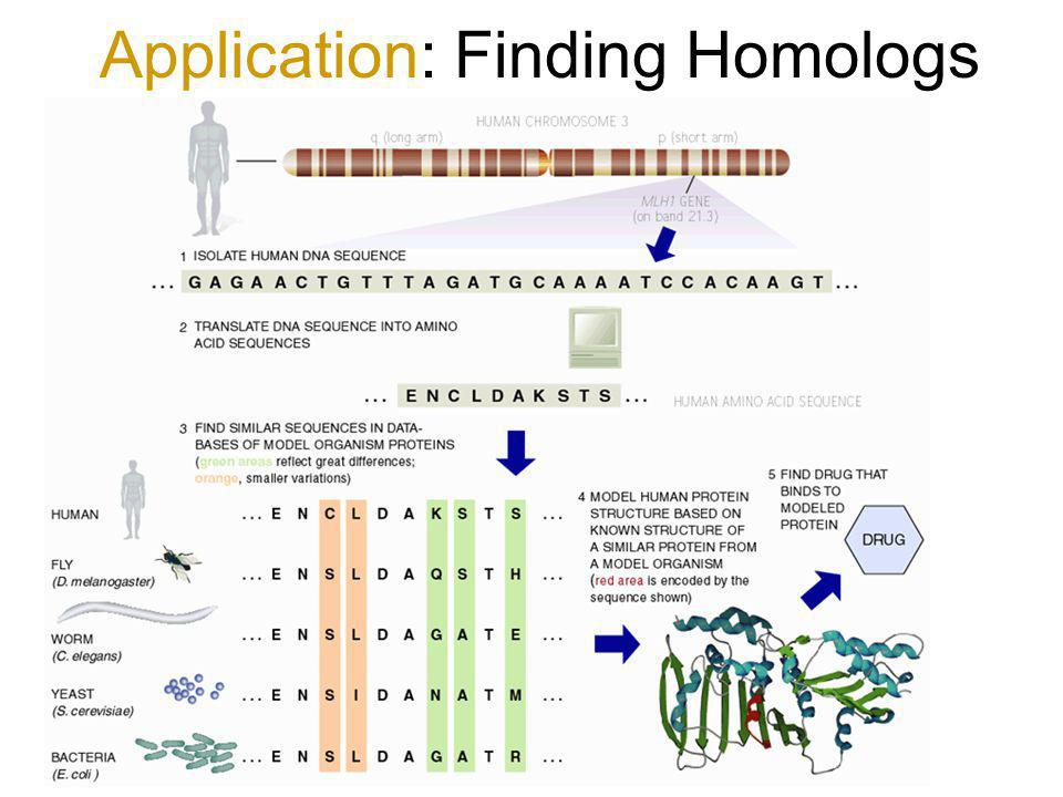 Application: Finding Homologs