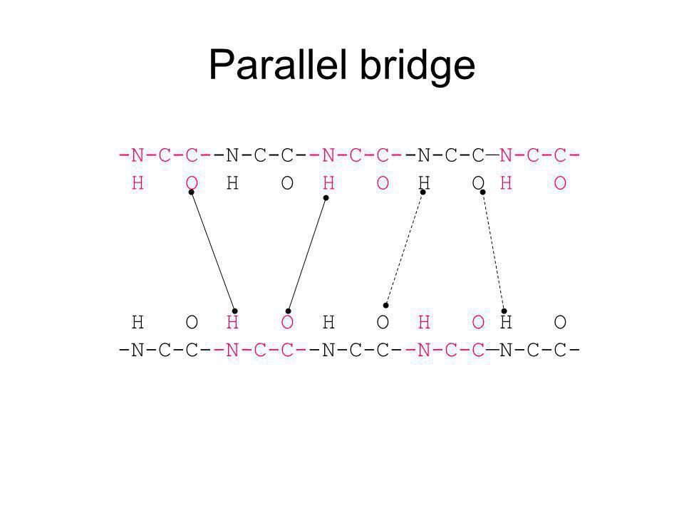 Parallel bridge -N-C-C--N-C-C--N-C-C--N-C-C—N-C-C- H O H O H O H O H O