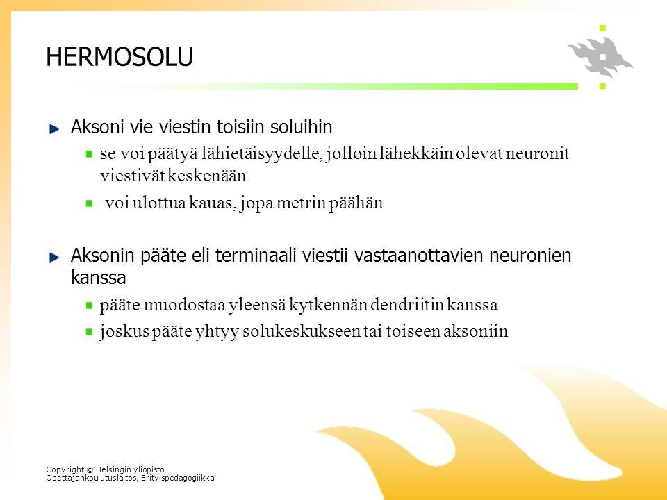 HERMOSOLU Aksoni vie viestin toisiin soluihin