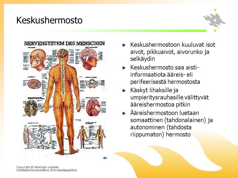 Keskushermosto Keskushermostoon kuuluvat isot aivot, pikkuaivot, aivorunko ja selkäydin.