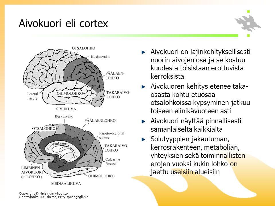 Aivokuori eli cortex Aivokuori on lajinkehityksellisesti nuorin aivojen osa ja se kostuu kuudesta toisistaan erottuvista kerroksista.