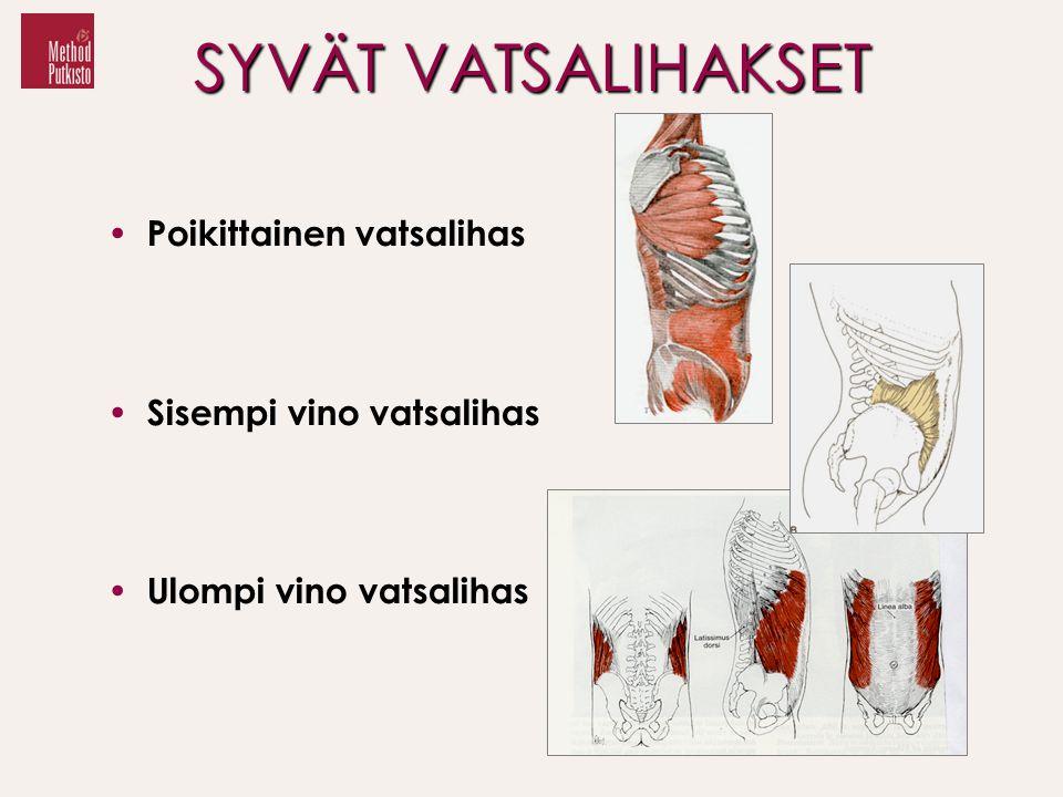 SYVÄT VATSALIHAKSET Poikittainen vatsalihas Sisempi vino vatsalihas