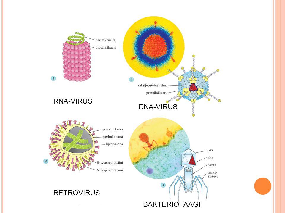 RNA-VIRUS DNA-VIRUS RETROVIRUS BAKTERIOFAAGI