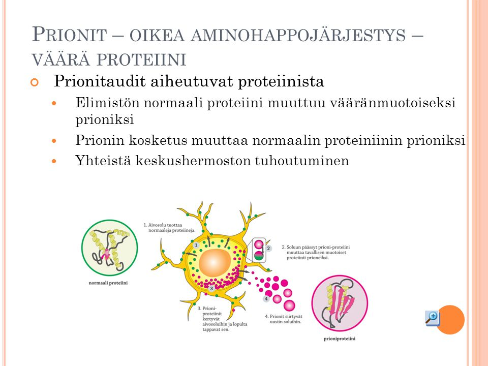Prionit – oikea aminohappojärjestys – väärä proteiini