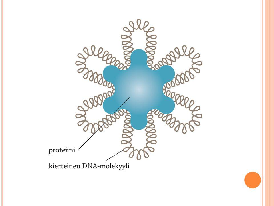 Dna:n pakkautumisen pieneen tilaan mahdollistaa nukleosomirakenne, joka toimii ilmeisesti myös dna:n suojana. Aitotumaisten nukleosomirakenne on osoittautunut evoluutiossa erittäin tärkeäksi, sillä eri lajien nukleosomirakenteeseen vaikuttavat proteiinit ovat eriytyneet tavattoman vähän.