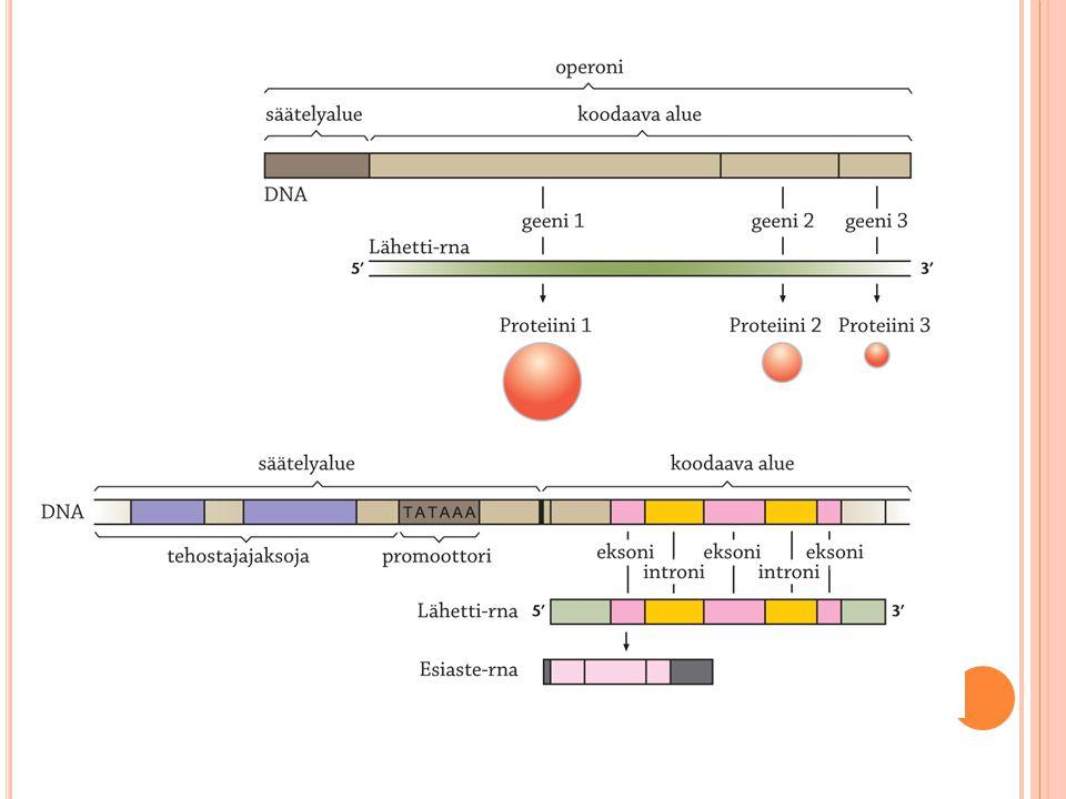 Paitsi proteiinit ja käynnistäjäalueella sijaitsevat dna-jaksot, saattaa geenien ilmenemistä säädellä myös muualla kromosomissa sijaitsevat dna-jaksot. Nämä tehostaja-jaksot ovat tyypillisiä eukaryoottien transkription säätelyssä. Ne voivat sijaita kaukana, jopa tuhansien emäsparien päässä varsinaisesta transkription aloituskohdasta joko ylä- tai alavirtaan. Dna-molekyylin kiertyessä ja taipuessa lenkkimäiseksi ulottuu geenistä kaukanakin sijaitsevien säätelyjaksojen ja/tai niihin sitoutuneiden proteiinien vaikutus oikeaan kohteeseen. Tehostajat voivat sijaita kääntyneinä molemmin päin, joko alku-loppu - tai loppu-alku -suuntaisesti. Myös geenien ilmenemistä vaimentavia jaksoja on olemassa. Tehostajat ovat tärkeitä etenkin tietyssä kudoksessa tai kehitysvaiheessa ilmenevien geenien säätelyssä. Tehostajajaksojen sekä niihin sitoutuvien että muiden säätelevien proteiinien vuorovaikusten selvitys on nykyisen geenibiologisen tutkimuksen polttopisteessä.