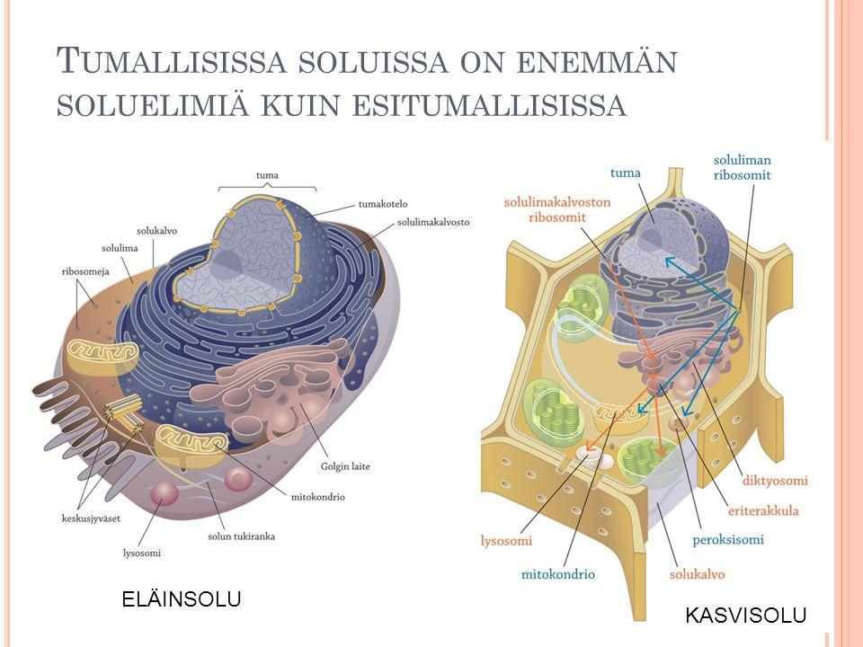 Tumallisissa soluissa on enemmän soluelimiä kuin esitumallisissa