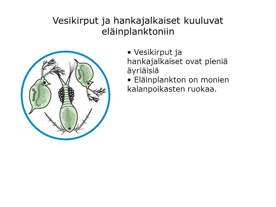 Vesikirput ja hankajalkaiset kuuluvat eläinplanktoniin