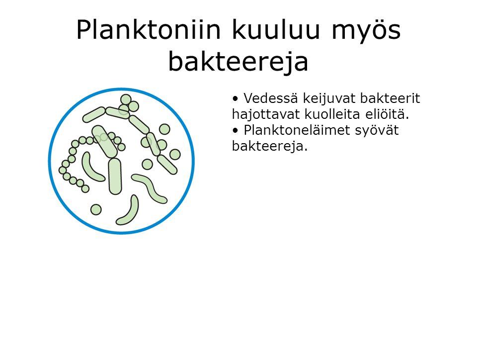Planktoniin kuuluu myös bakteereja