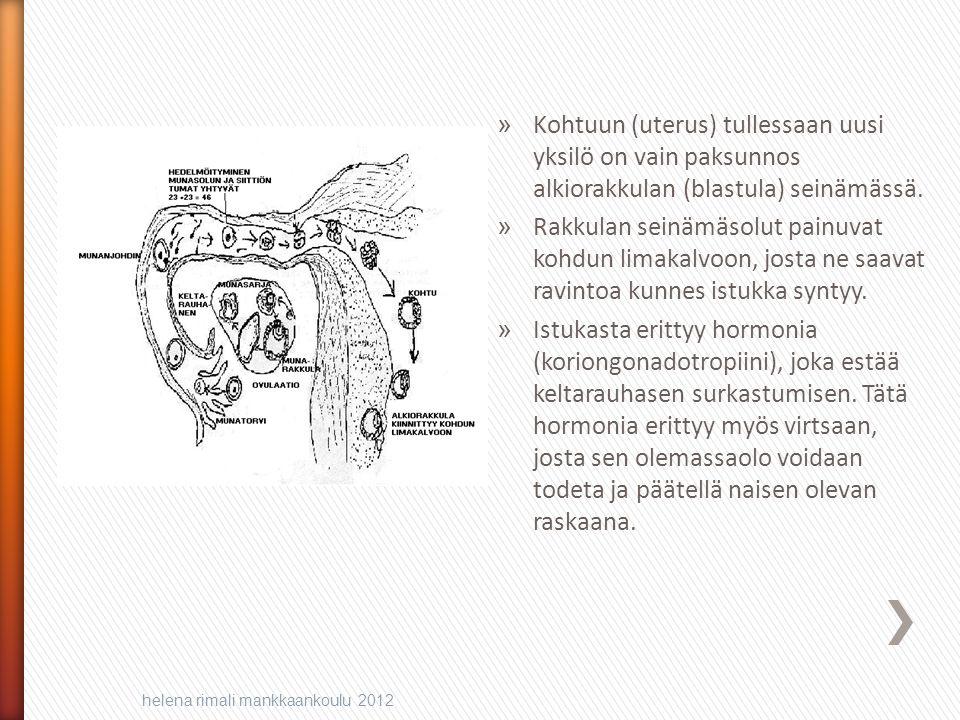 Kohtuun (uterus) tullessaan uusi yksilö on vain paksunnos alkiorakkulan (blastula) seinämässä.