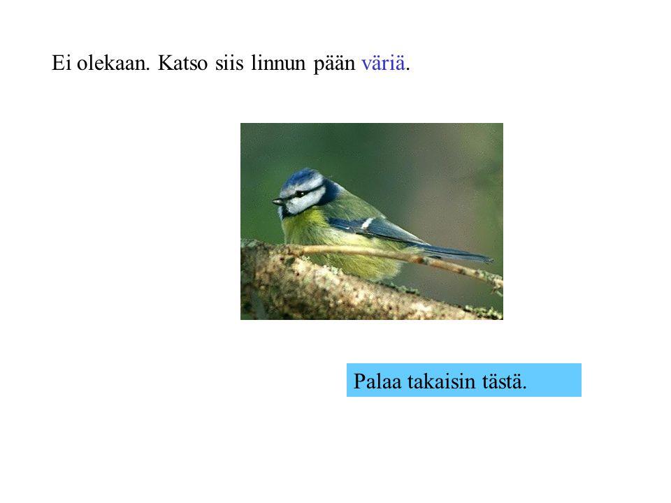 Ei olekaan. Katso siis linnun pään väriä.