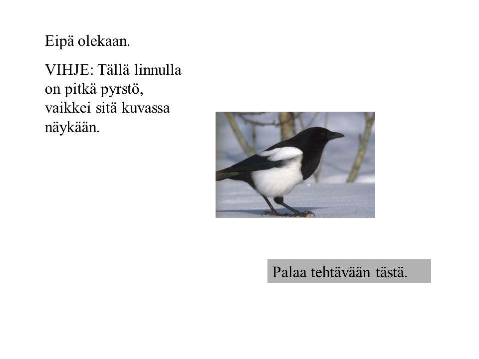Eipä olekaan. VIHJE: Tällä linnulla on pitkä pyrstö, vaikkei sitä kuvassa näykään.