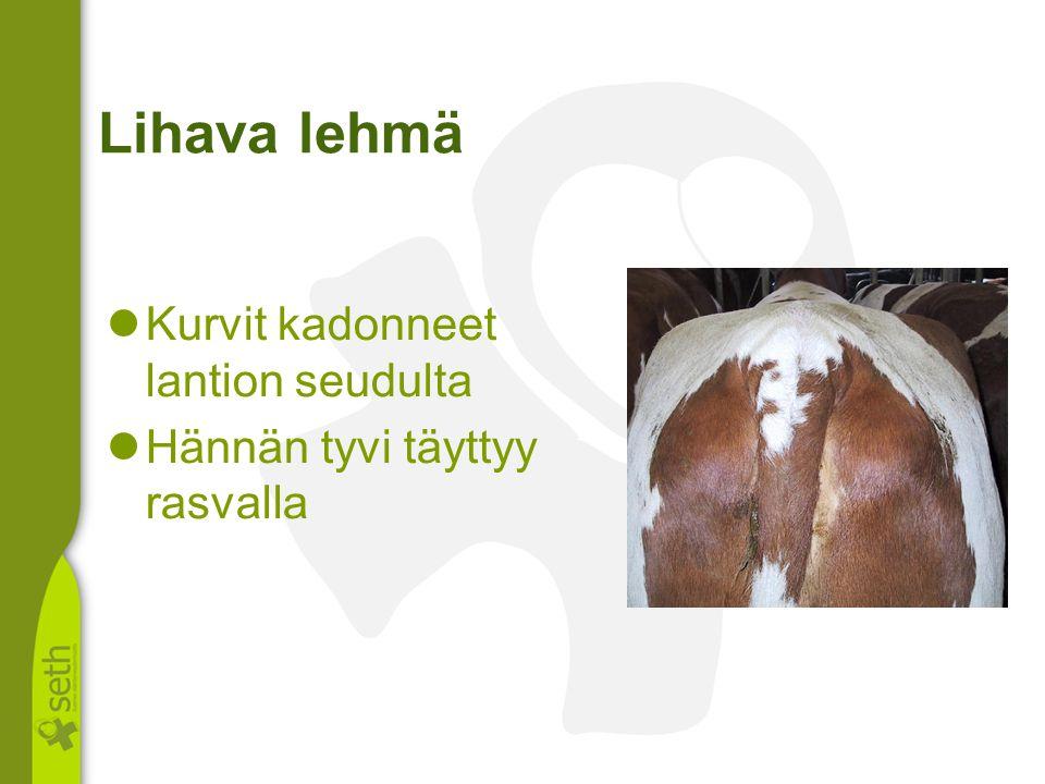 Lihava lehmä Kurvit kadonneet lantion seudulta