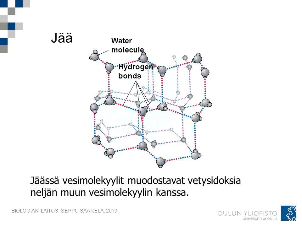 Jää Water. molecule. Hydrogen. bonds. Jäässä vesimolekyylit muodostavat vetysidoksia neljän muun vesimolekyylin kanssa.