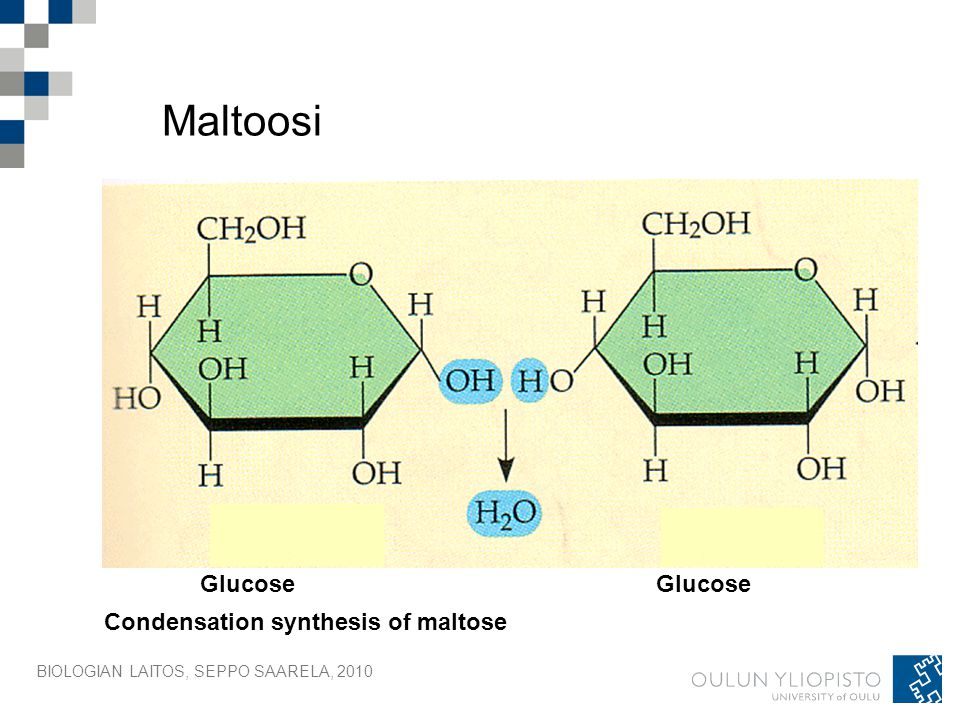 Maltoosi Glucose Glucose Condensation synthesis of maltose