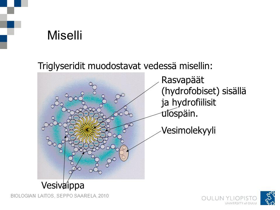 Miselli Triglyseridit muodostavat vedessä misellin: