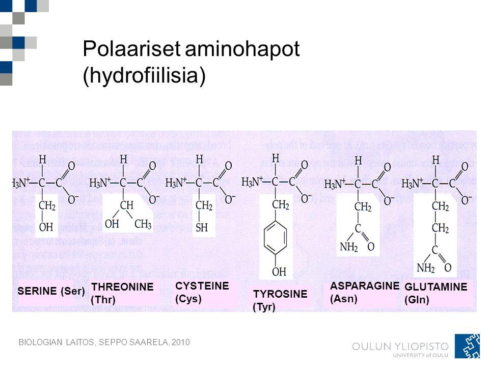 Polaariset aminohapot (hydrofiilisia)