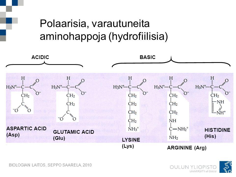Polaarisia, varautuneita aminohappoja (hydrofiilisia)