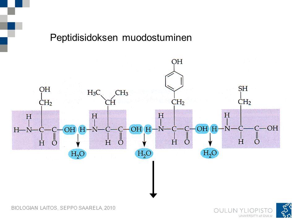Peptidisidoksen muodostuminen