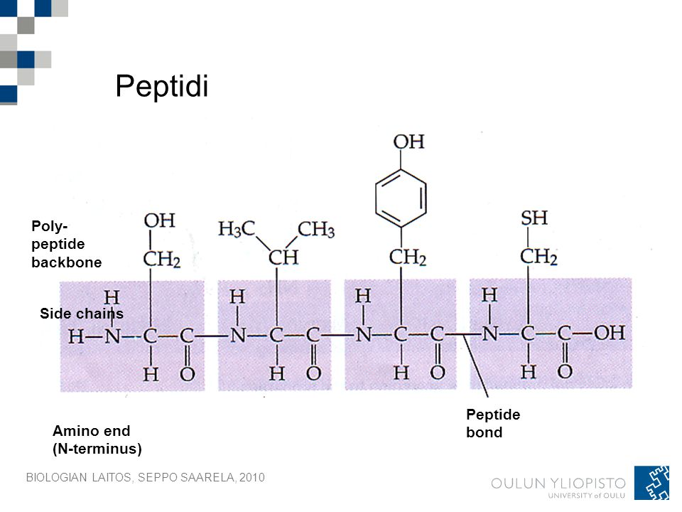 Peptidi Poly- peptide backbone Side chains Peptide bond Amino end